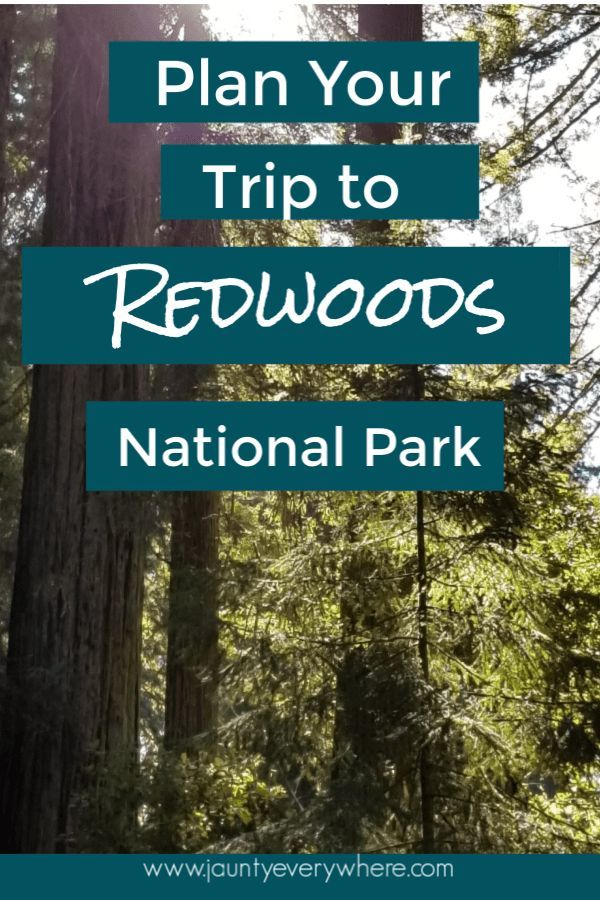 How to Make the Most of Your Trip to Redwoods National Park