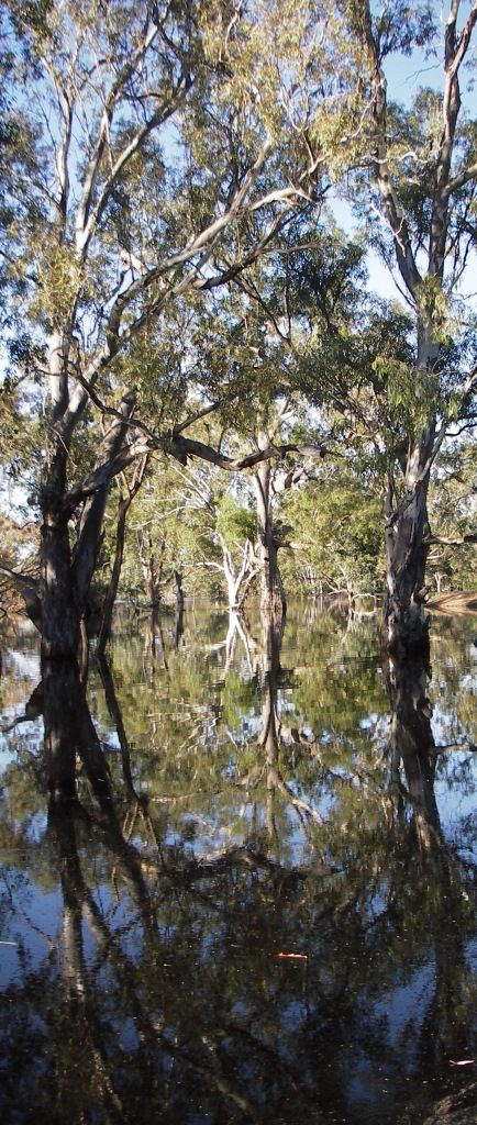 Red Gum Swamp on the Polkemmet Road