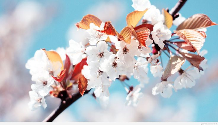 Beautiful Free Spring Wallpapers to Bring You Joy 1440×900 Spring Images Wallpapers (32 Wallpapers) | Adorable Wallpapers