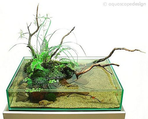 """Called """"wabi-kusa"""" style. It is for those who want an aquarium but don't have the space or budget. Probably not for cat owners."""