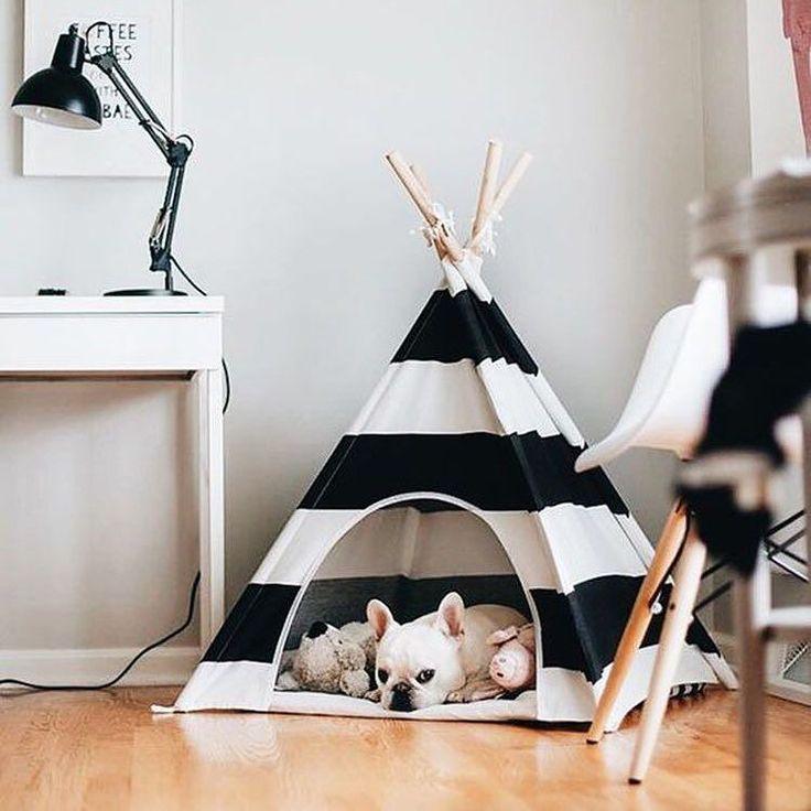 Eles também merecem uma casinha decorada e descolada né?  #amei #love #pets #casa
