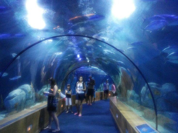 Best 25 oceanografic valencia ideas on pinterest Entradas aquarium valencia