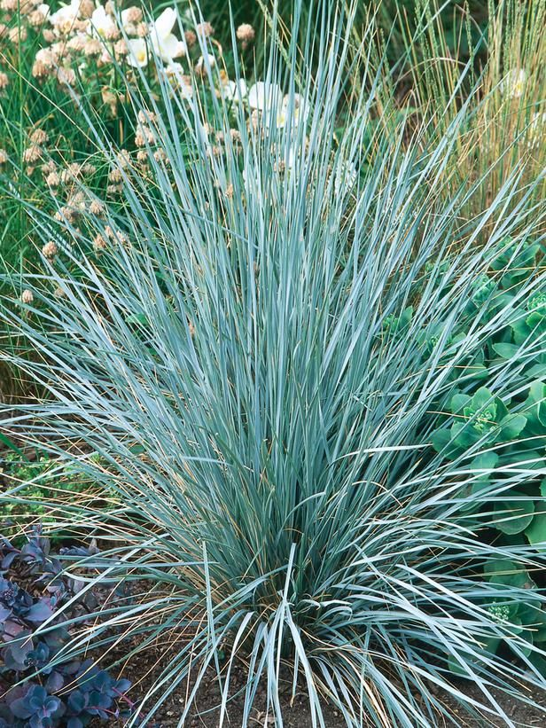 Container gardens for chilly weather gardens sun and plants for Small ornamental grasses for sun