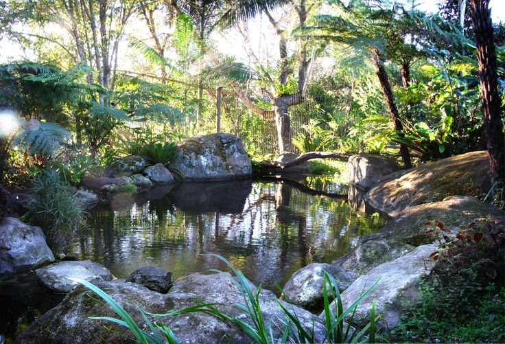 Natural swimming pool in Bellingen NSW