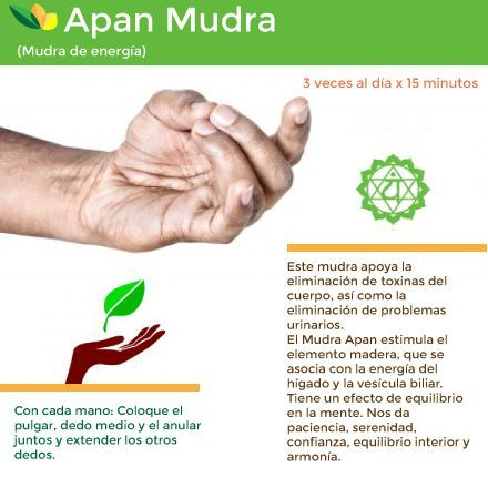 the apan mudra is one of the most important of all yoga