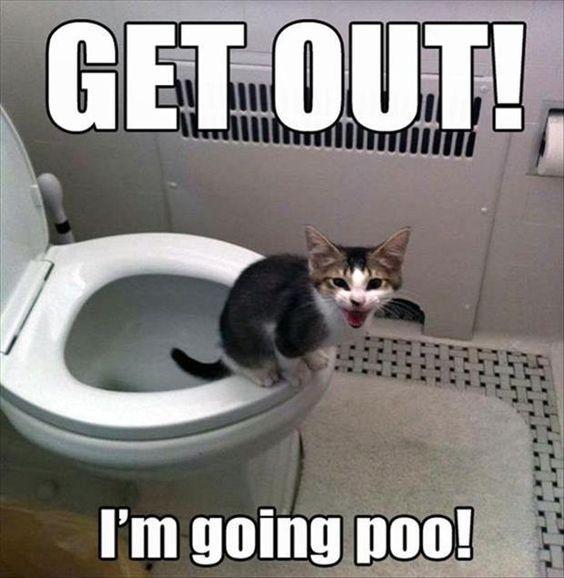 Funny cats – 23 pics |