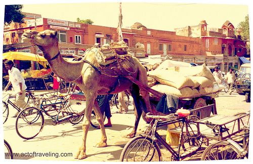 On the streets of Jaipur, India. #Rajasthan