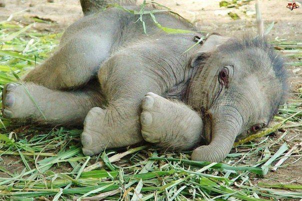 Слоны, пожалуй, одни из самых умных и чувствительных животных на Зе... » Смешные Анекдоты Истории Цитаты Афоризмы Стишки Картинки прикольные Игры