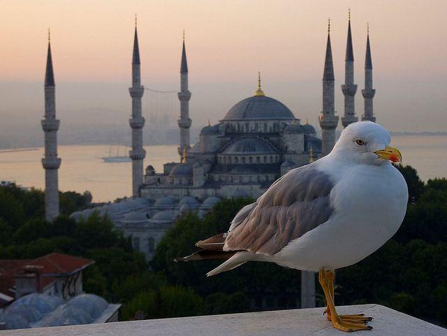 Jonathan Livingstone Istanbuli by Frans.Sellies, via Flickr.com