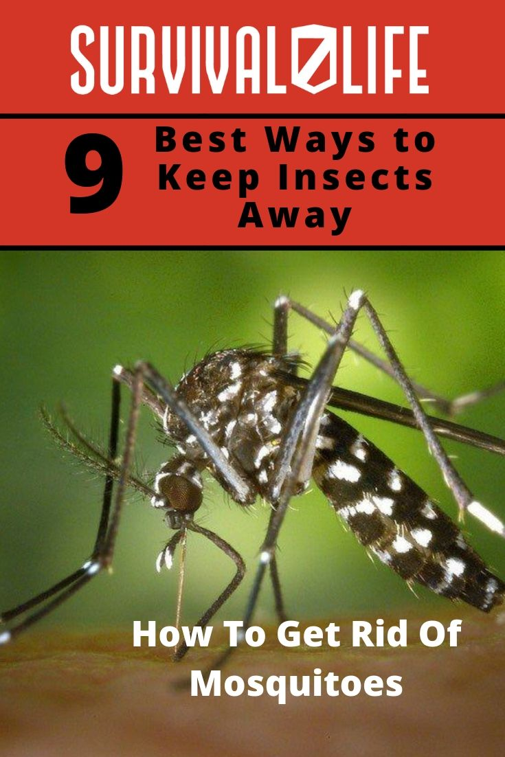 How To Get Rid Of Mosquitoes Survival Survival Life Survival