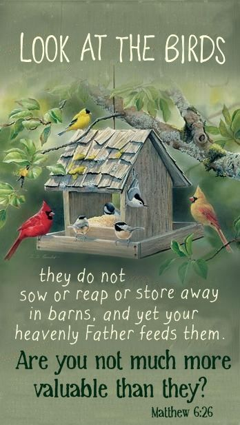"""Look at the birds; they do not sow or reap or store away in barns, and yet your heavenly Father feeds them. Are you not much more valuable than they?"" - Matthew 6:26"