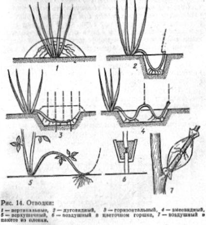 Практикум по плодоводству Ильинский А. А. «Агропромиздат», 1988