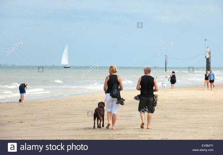 Several People On The Beach In The Summer Some With Dogs, Others Stock Photo, Royalty Free Image: 85694559 - Alamy