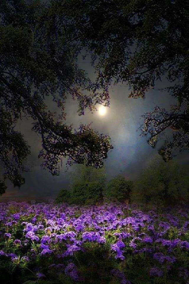 105 best good night sweet dreams images on pinterest - Good night nature pic ...