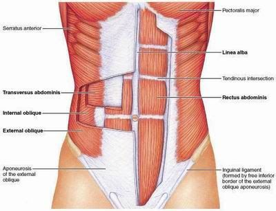 """The """"six pack"""" is made up of four different muscles. The rectus abdominis, which forms the external six-pack muscles and produces flexion/extension; the transverse abdominis, which sits underneath and sucks everything in tight; the obliques, which help with rotation and form the """"v-cut""""; and the serratus anterior, which are the little finger muscles beneath the chest. Building all four is key for a stellar midsection."""
