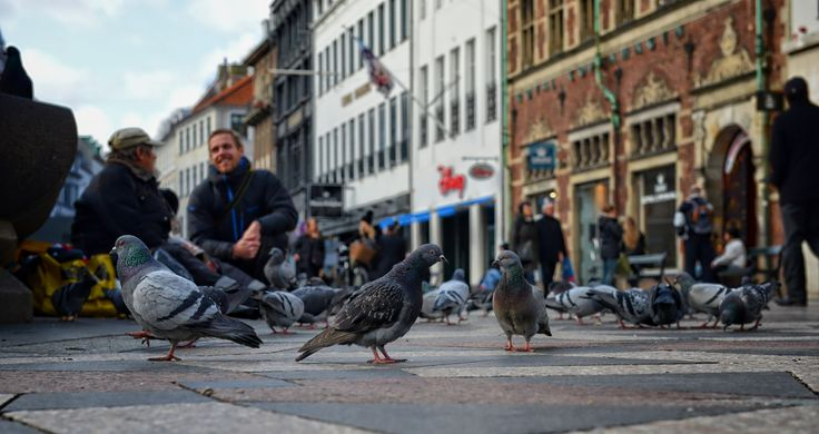 "Denmark has a lovely capital, which I can recommend anyone to visit. The capital, Copenhagen has a walkway that is especially known. It is called ""Strøget"".  In one of the squares, I stopped and literally let myself down with all the pigeons. Sometimes it's funny with a different perspective. In this case, the street perspective of a dove.  They live their lives side by side, with us humans. They almost feel like they own the street as much as us. Making small talk with each other (as well…"
