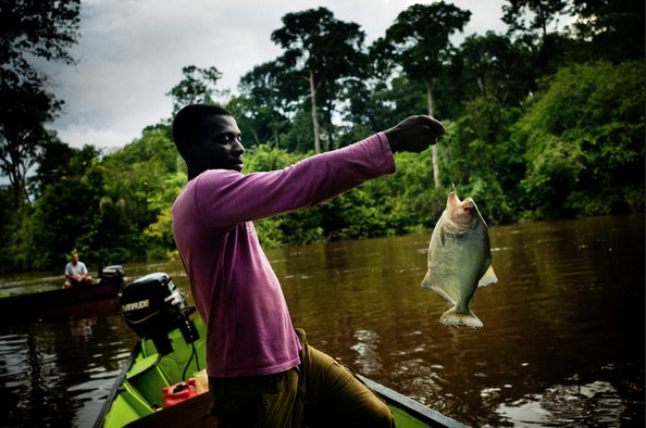 Angelo Amimba, 21, who drives a boat for river tours, catches a piranha.