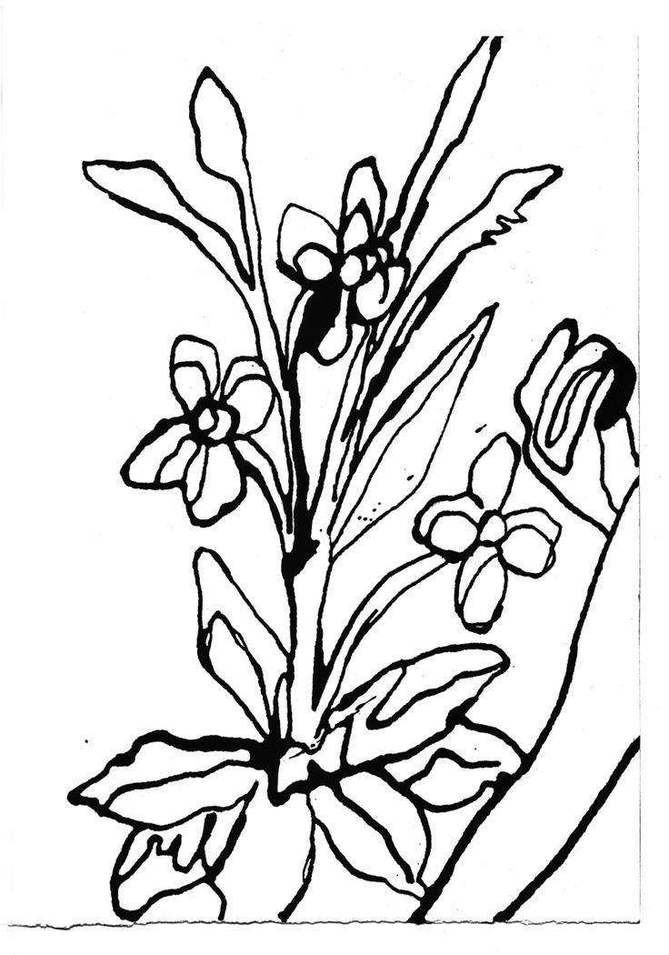 Gary Hume's continous line study of plants