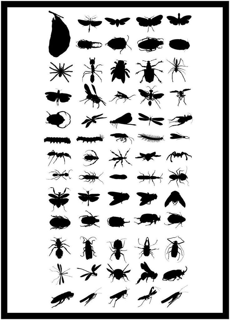 poster insecten zwart wit
