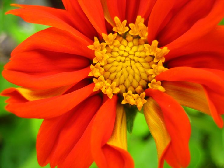 God's small flower that is so gorgeous to our big world .... by Churaipon C. Klaijumlang