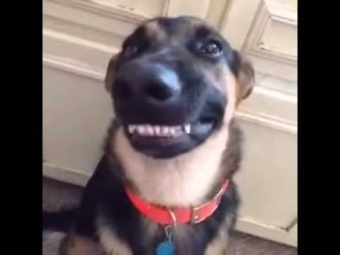 This Smiling Dog Video Was the Best 6 Seconds of My Day! Seriously.