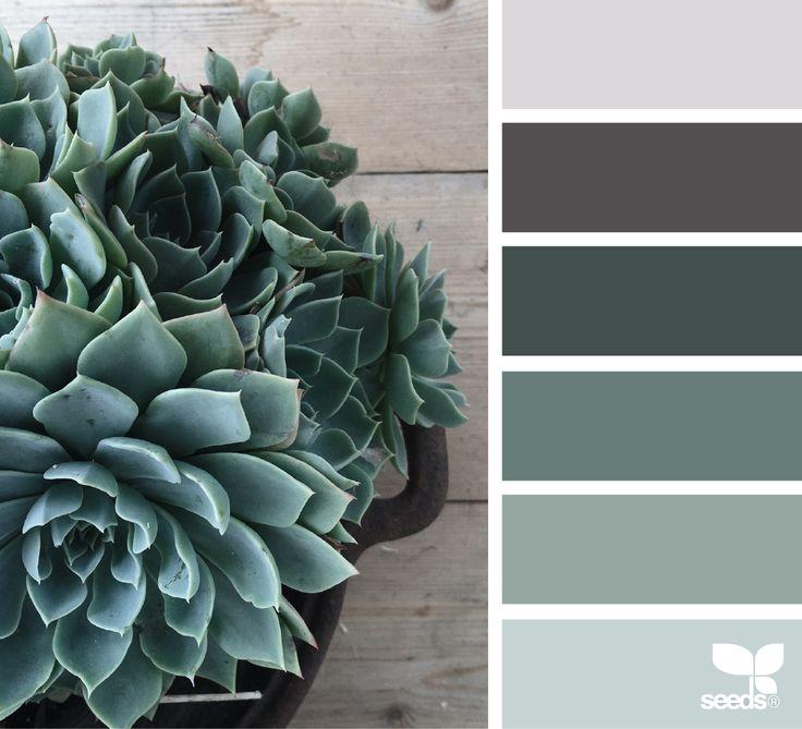 dégradé de couleurs des succulentes