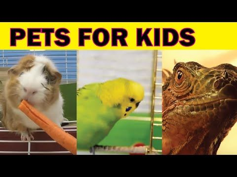 Pets for Kids, Pet Videos for Children, Lots of Pets at Home - YouTube