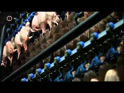 Globál menü (magyar ismeretterjesztő film, 2014)