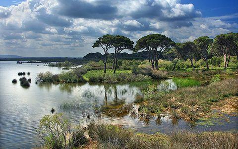 Το δάσος της Στροφυλιάς μοιράζεται μεταξύ Ηλείας και Αχαΐας.