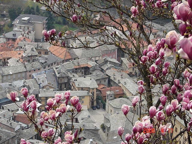 a view with purple magnolia- sacro monte, varallo, piemonte, 2006