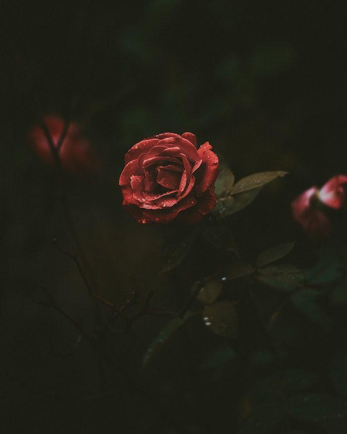 1001 Images Pour Un Fond D Ecran Fleur Magique Fleurs