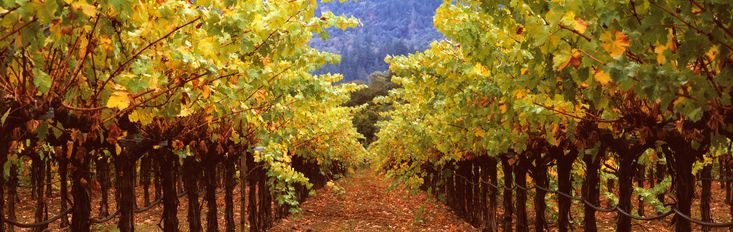 Under Vineyard Rows by Terry Thompson. Driving north on highway 29 into St. Helena in the Napa Valley, Thompson saw this scene and had to set up his view camera to capture this provoking image. It was after harvest in the Fall with the grapevine leaves starting to turn color. The artist could not resist the symmetry and the colors. This is a fine art, limited edition print signed by the artist. Only 25 reproductions of the image will be created regardless of size. Each image will be printed…
