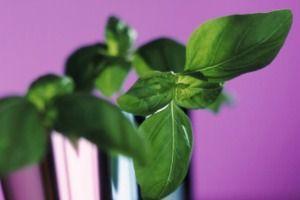 A top 9 fűszernövény
