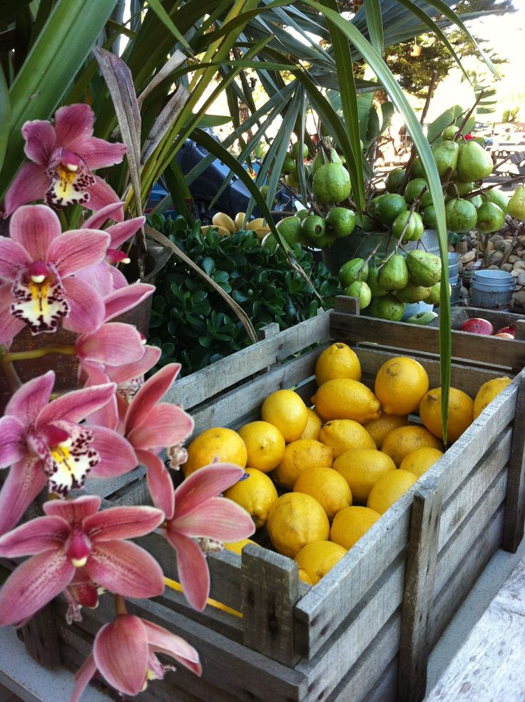 Fruits Boatshed Palmbeach