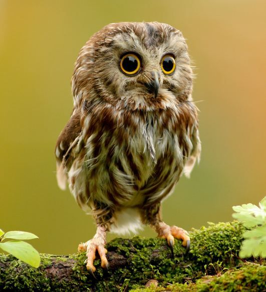 Can this be real? It's too cute to be real but with owls I guess you just never know...
