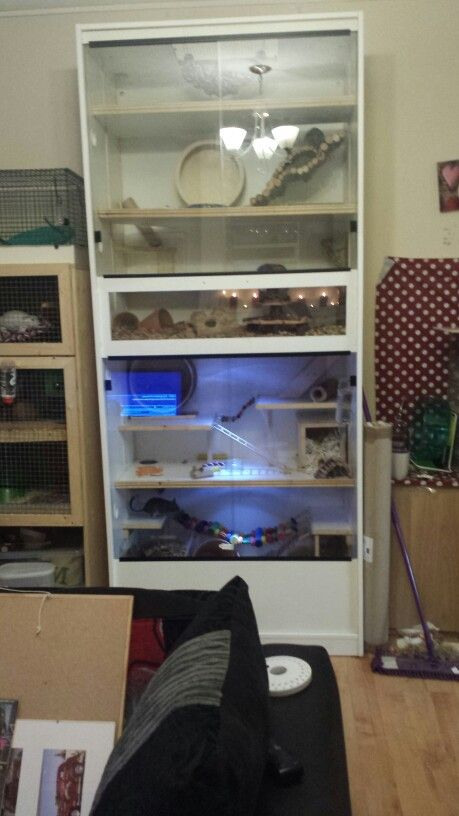 Our First home made degu cage