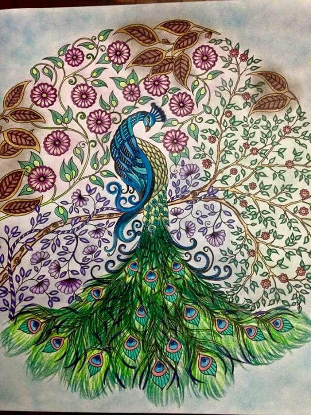 42 Best Images About Peacock Secret Garden Pavao Jardim