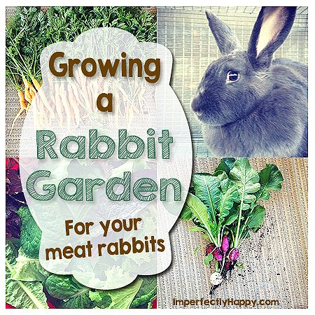 Growing a Rabbit Garden for Your Meat Rabbits by ImperfectlyHappy.com #meatrabbits #gardening #fodder #garden #rabbits #survival #homesteading #backyard #farm