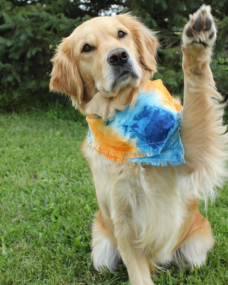 Good morning friends! hope you have a paw-tastic day!