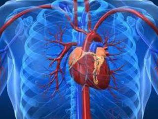 Απολύτως κρίσιμα για την επιβίωση του θύματος είναι τα τρία πρώτα λεπτά μετά την εκδήλωση καρδιακής ανακοπής. Σύμφωνα με τους επιστήμονες...