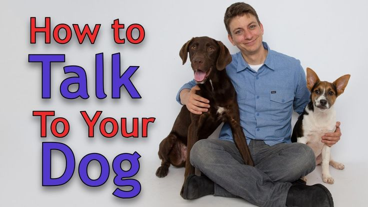 Dog Training: The ART of Communicating with Your Dog; Great Video to reinforce communication with your dog