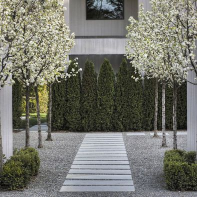 Pavers. White blossoming trees in a row. Background of vertical green. Low green hedges up front to tie it together.