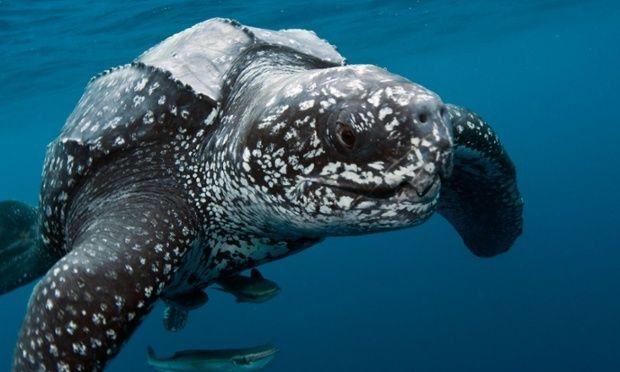 Vietnam seizes over 1,000 dead endangered sea turtles