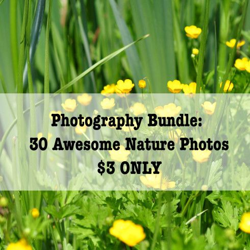 Photography Bundle: 30 Awesome Nature Photos – $3 ONLY