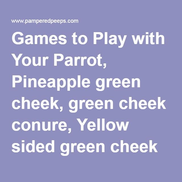 Games to Play with Your Parrot, Pineapple green cheek, green cheek conure, Yellow sided green cheek for sale, Turquoise green cheek breeder, conyers, parrot flight suit, avian flightsuit, gouldian finch for sale, Lady Gouldian Finch, Crimson Bellied Conure, Pionus, Eclectus, African Grey Breeder