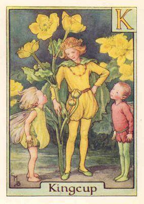 FLOWER FAIRIES ALPHABET:c1940's. K = KINGCUP. Old color print