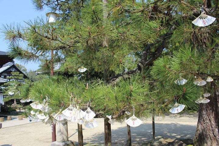 Good fortunes one hangs to make them true bad fortunes are hang to be chase away #Amanohashidate #ThreeViewsJapan