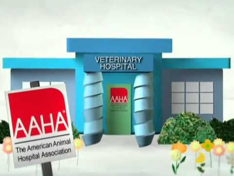 What is the American Animal Hospital Association and why is it important when selecting a veterinary team?