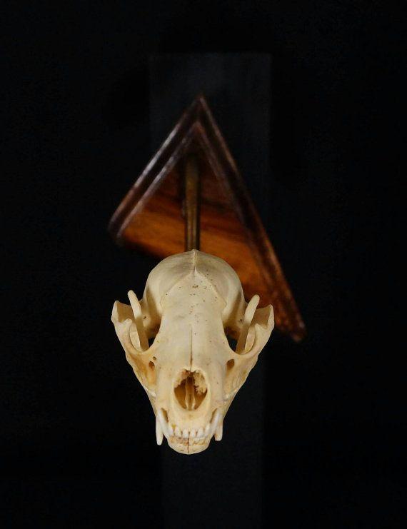 Raccoon Skull Wallhang