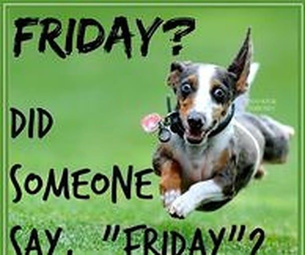 We Made It Happy Friday Everyone Friday Shopdsc Its Friday